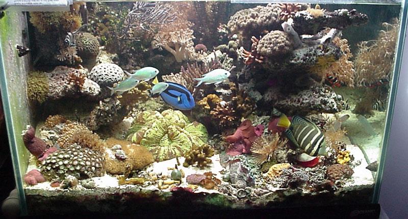Augsburg College Biology Aquaria The Aquarium