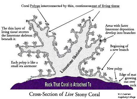 the basic categories and structure of coral reefs